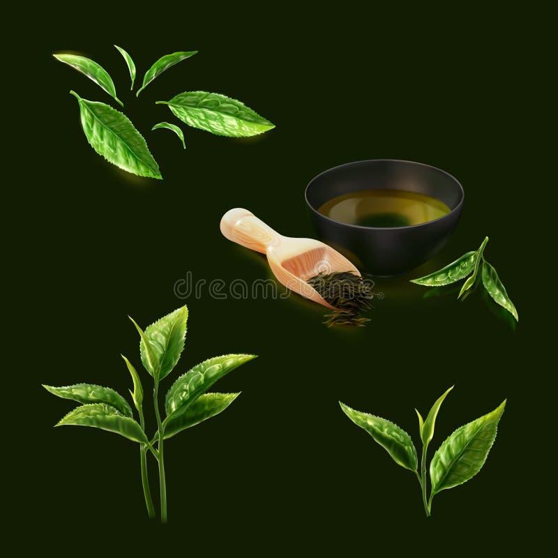 Un sistema de té verde en muchos tipos imagenes de archivo