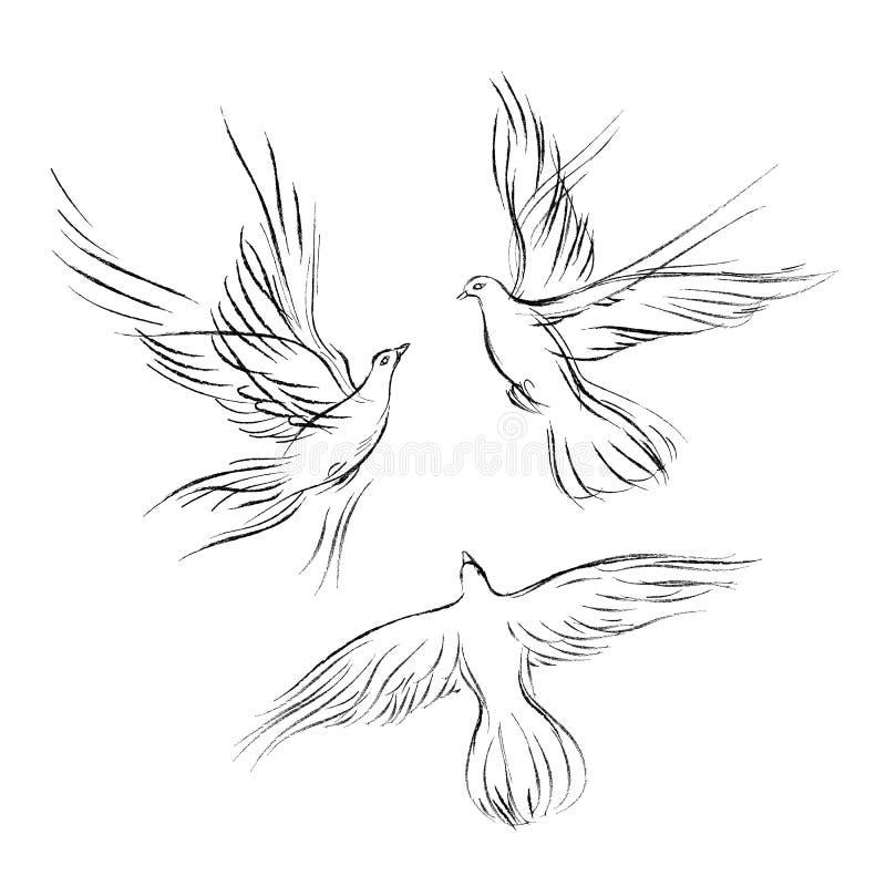 Un sistema de tres palomas, un esquema gráfico Vector el ejemplo, elemento del diseño para casarse, un día del ` s de la tarjeta  libre illustration