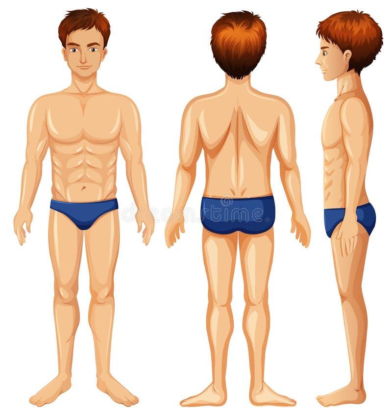 Un sistema del cuerpo masculino stock de ilustración