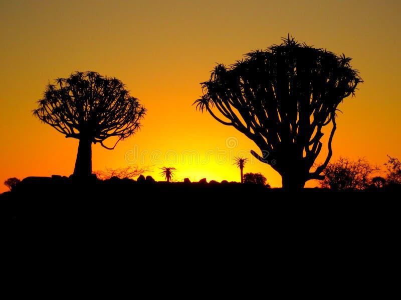 Un sistema namibiano de la puesta del sol contra árboles del estremecimiento imagen de archivo