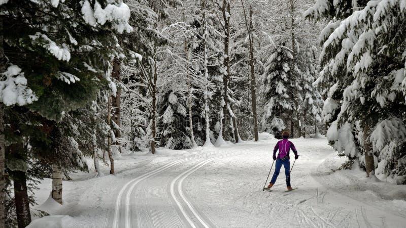 Un skieur solitaire de pays croisé photographie stock