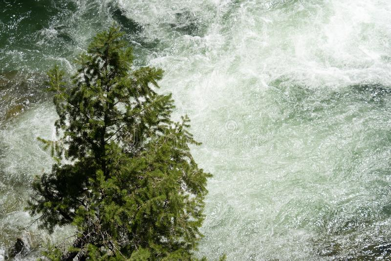 Un solo árbol solitario hace una pausa compitiendo con las aguas rápidas de la cascada de Dagger Falls en Frank Church Wilderness imagen de archivo