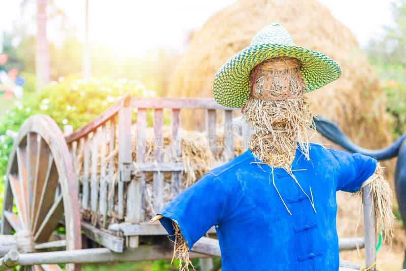 Un sombrero de la camisa y del granjero del desgaste del espantap?jaros y en el campo imagen de archivo libre de regalías
