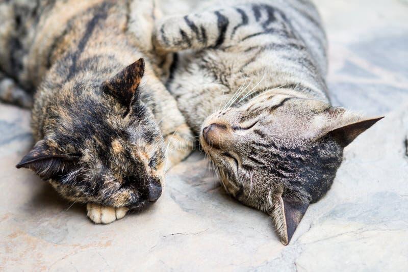 Un sonno di due gatti dei cutes fotografie stock libere da diritti