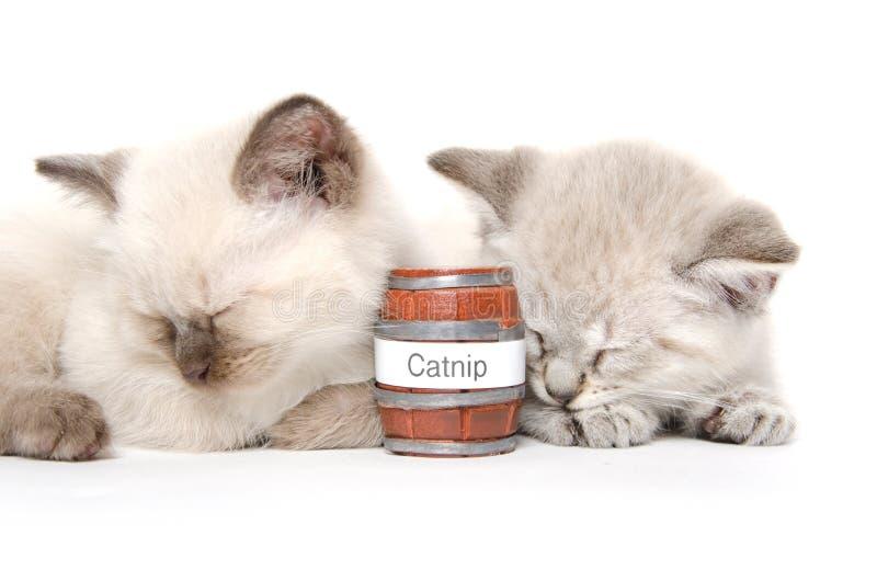 Un sonno sveglio di due gattini fotografia stock libera da diritti