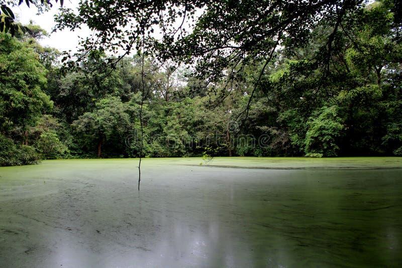 Un souhait vert a coloré l'étang dans la forêt de Dewda photographie stock libre de droits