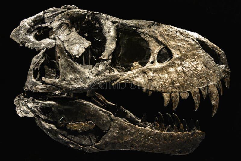 Un squelette d'un dinosaure image stock