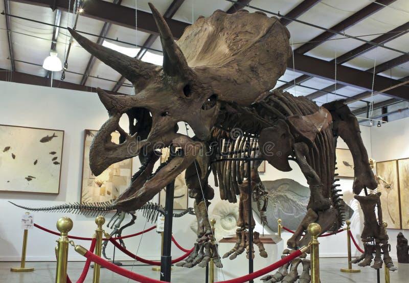 Un squelette de Triceratops aux fossiles et aux minerais de GeoDecor images libres de droits
