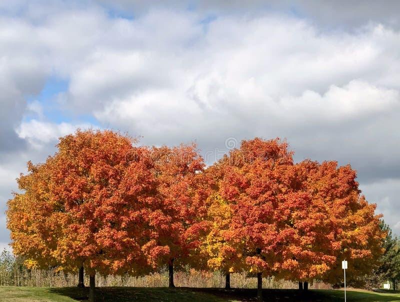 Un support d'un feuillage d'automne image libre de droits