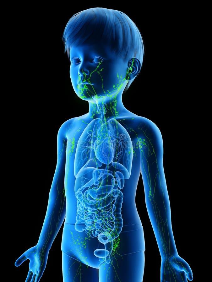 Un système lymphatique de garçons illustration libre de droits