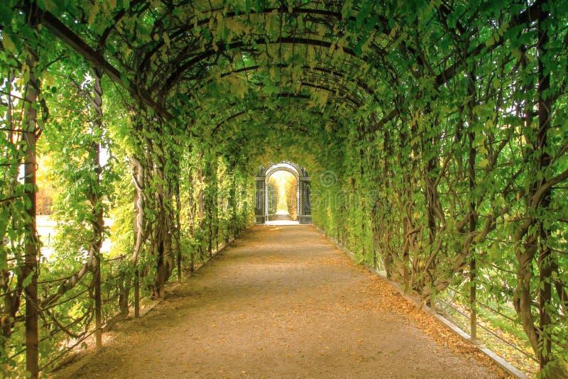 Un túnel verde romántico en el medio del otoño foto de archivo