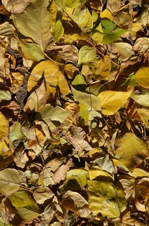 Un tapis des feuilles d'automne a bourdonné contrasty images stock