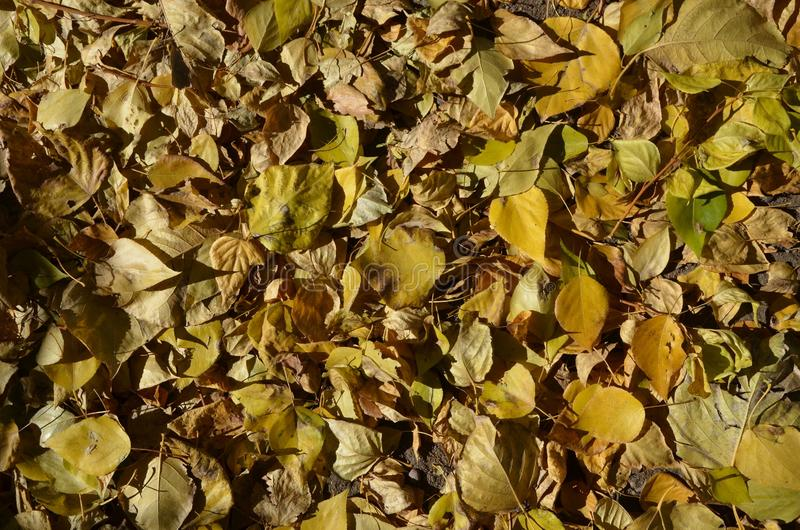 Un tapis des feuilles d'automne contrasty image stock