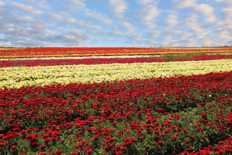 Un tapis des fleurs photographie stock
