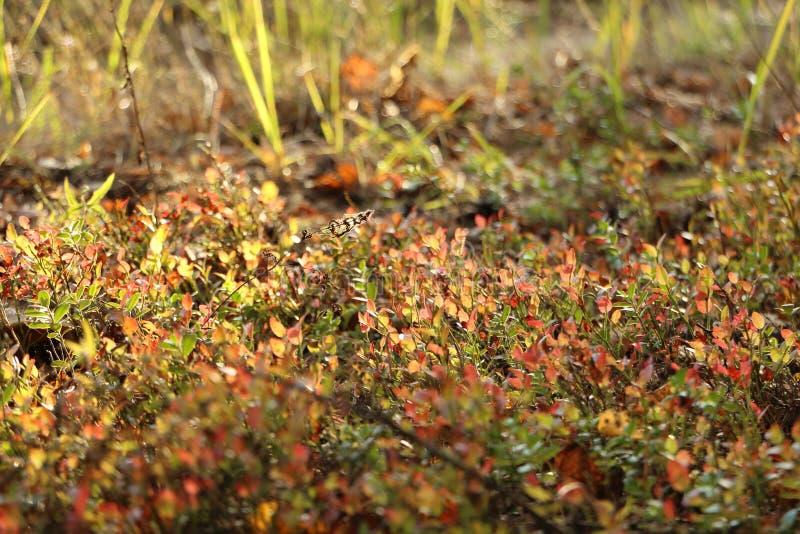 Un tappeto delle erbe della foresta al sole fotografia stock libera da diritti