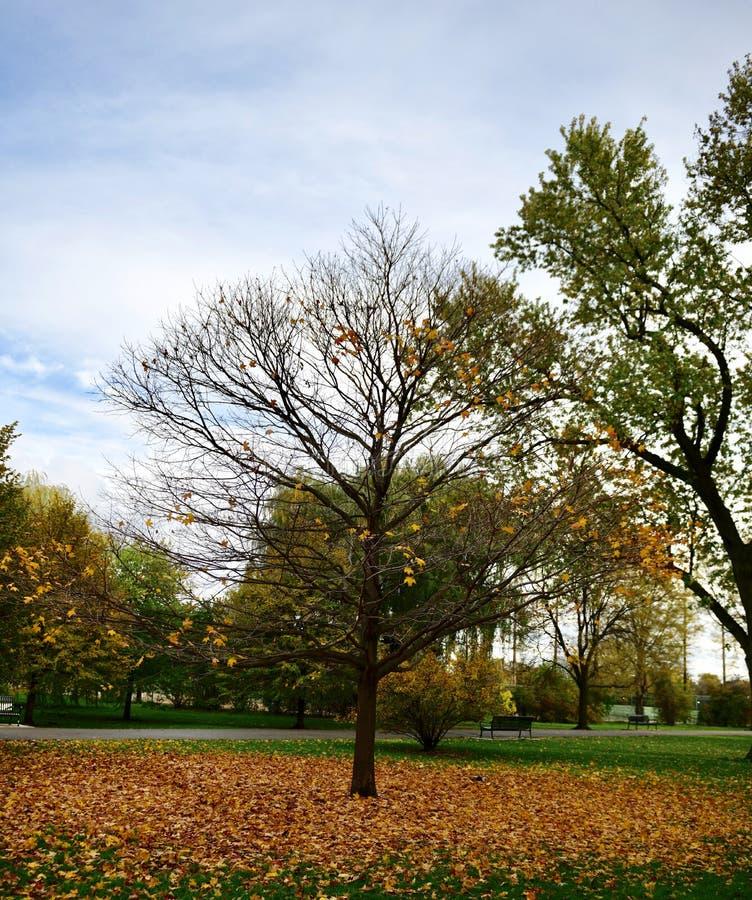 Un tappeto dorato delle foglie immagini stock libere da diritti