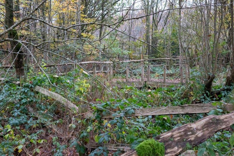 Un tardo giorno d'autunno a Buchan Park Crawley Regno Unito fotografie stock