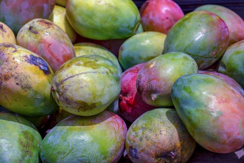 Un tas des mangues vertes photo libre de droits