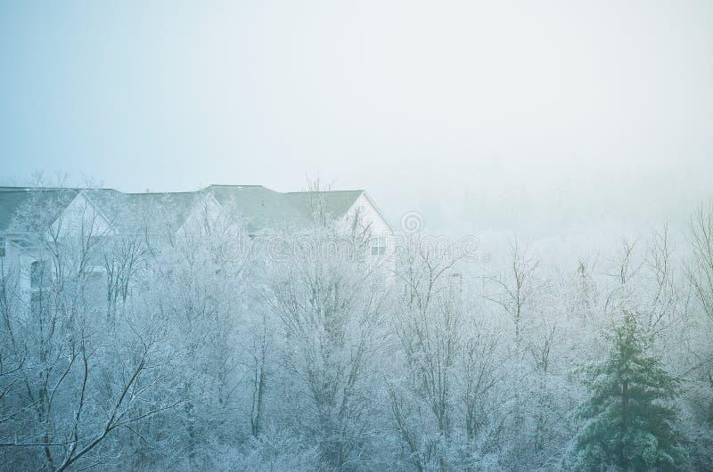 Un tetto dell'appartamento oltre gli alberi nell'inverno fotografia stock libera da diritti