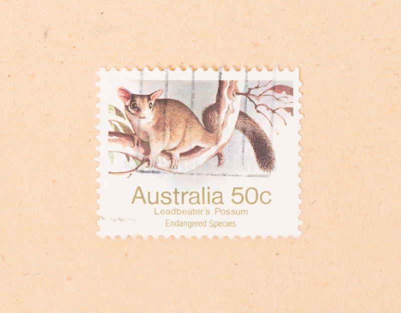 Un timbre imprimé en Australie montre l'opossum d'un Leadbeater, vers 1980 photos libres de droits