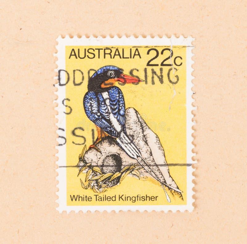 Un timbre imprimé en Australie montre un martin-pêcheur coupé la queue blanc, vers 1980 photographie stock libre de droits