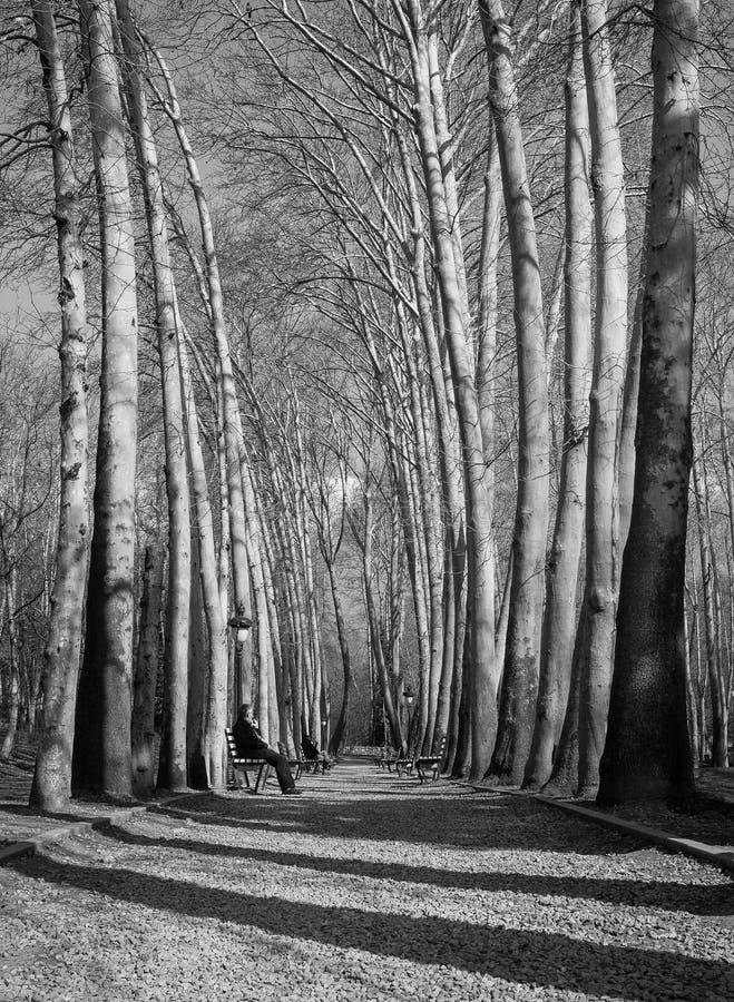 Un tir noir et blanc des arbres grands dans le complexe de Sa'adabad, Téhéran, Iran photo libre de droits