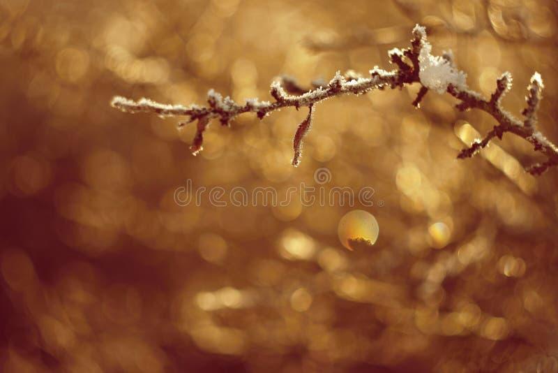 Un tiro hermoso de la naturaleza con puesta del sol Foto de una lente vieja con un fondo borroso y colorido hermoso imagen de archivo