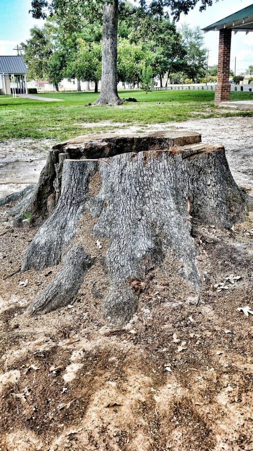 Un tocón de árbol en un parque de la ciudad fotografía de archivo libre de regalías