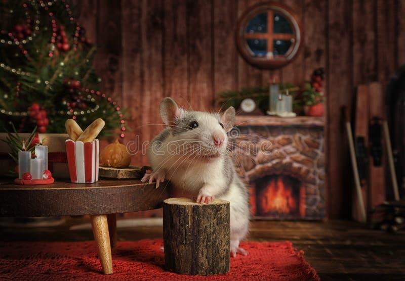 Un topo carino celebra il Capodanno nella sua casa accogliente immagini stock libere da diritti