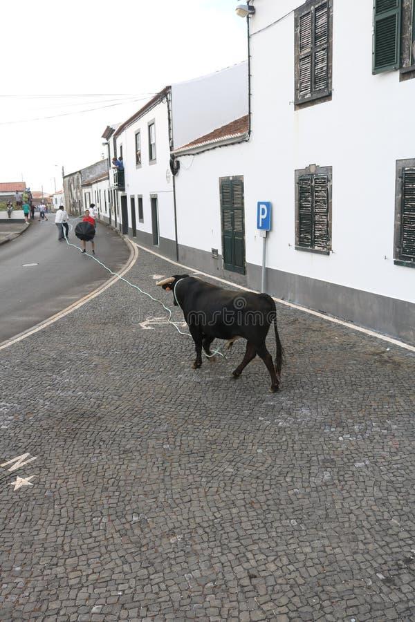 Un toro sciolto immagini stock libere da diritti
