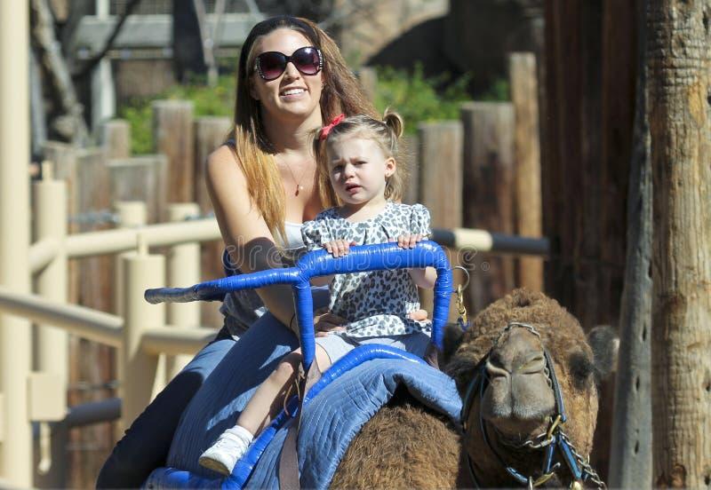 Un tour de chameau chez Reid Park Zoo photos stock