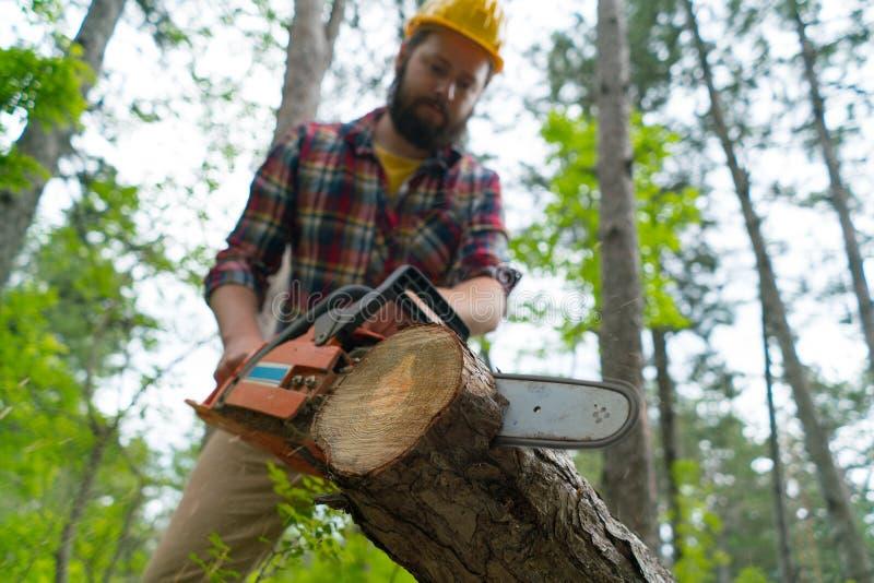 Un trabajador barbudo de la motosierra corta la madera con la motosierra imagen de archivo