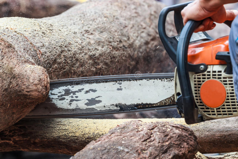 Un trabajador del bosque que corta el tronco con la motosierra imágenes de archivo libres de regalías
