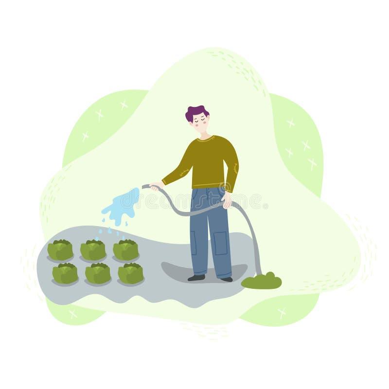 Un trabajador del hombre riega una cosecha de la col verde en el campo con una manguera del agua Escena del trabajo de la cosecha ilustración del vector