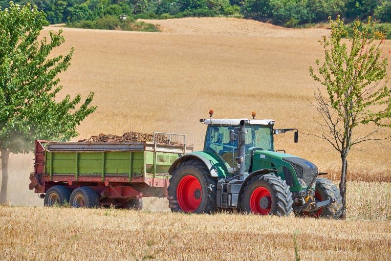 Un tracteur vert de producteurs avec les roues rouges encadrées entre deux arbres conduisant par un champ de blé tirant une remor photos libres de droits