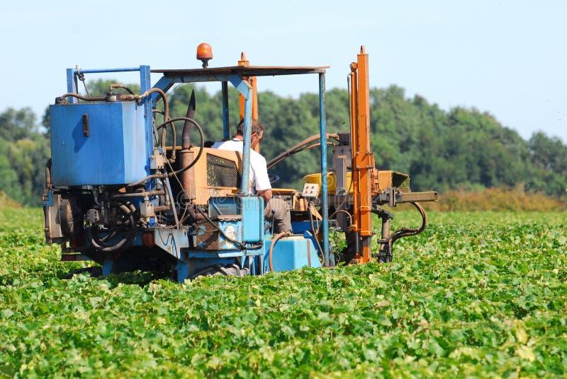 Un tractor en el viñedo imagenes de archivo