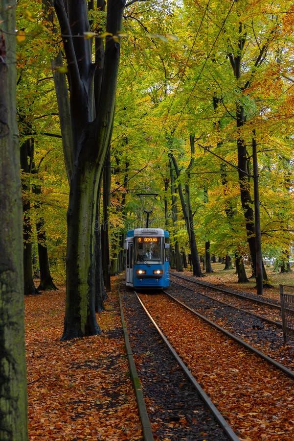 Un train en parc en Pologne photographie stock