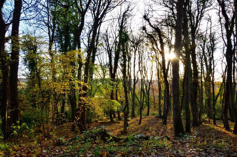 Un tramonto autunnale nella foresta immagine stock libera da diritti