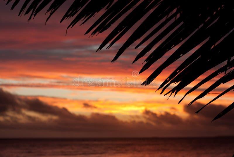 Un tramonto e una palma nel Tonga fotografia stock
