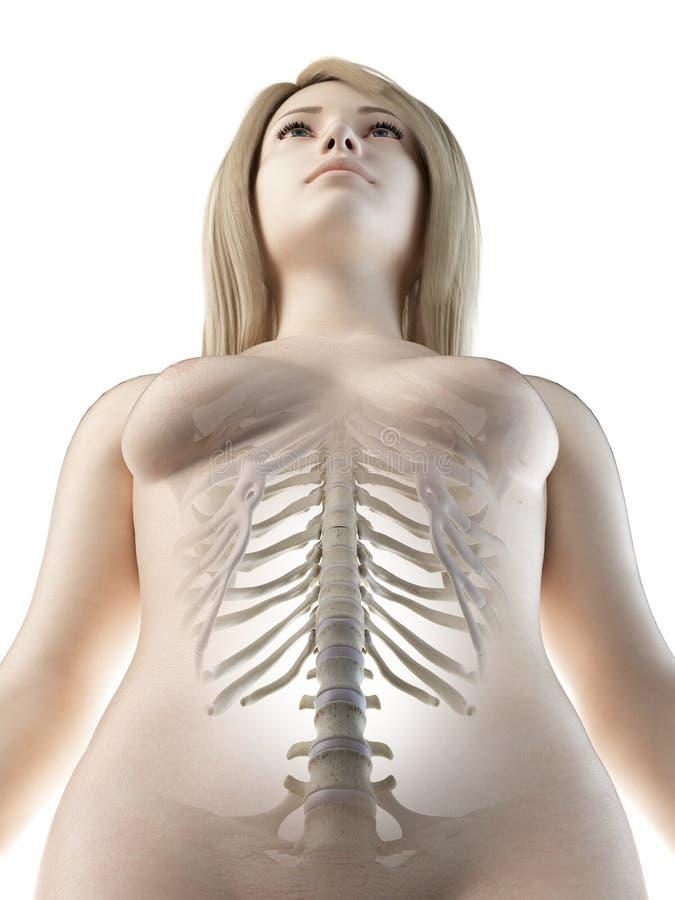 Un tratto lombare della colonna vertebrale delle femmine illustrazione vettoriale