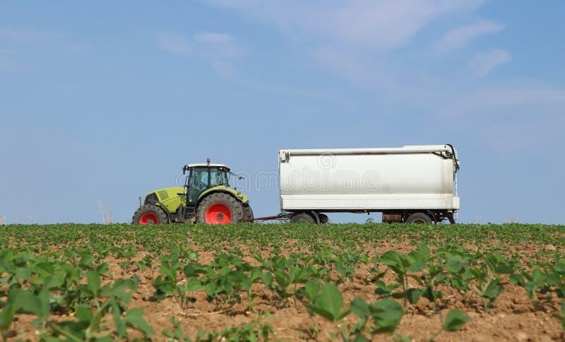 Un trattore rimorchia uno spandiletame direzionale sul campo coltivato con la crescita delle plantule immagini stock