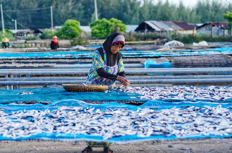 Un travailleur était séchage occupé les poissons pour le processus de sécher les poissons sous la chaleur du soleil avant que ce  image stock
