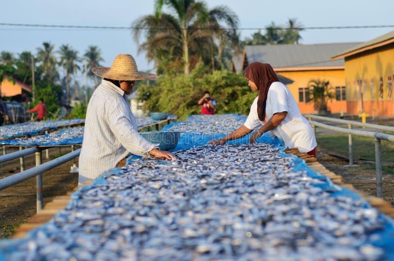 Un travailleur était séchage occupé les poissons pour le processus de sécher les poissons sous la chaleur du soleil avant que ce  photographie stock