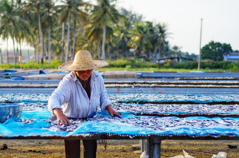 Un travailleur était séchage occupé les poissons pour le processus de sécher les poissons sous la chaleur du soleil avant que ce  photographie stock libre de droits