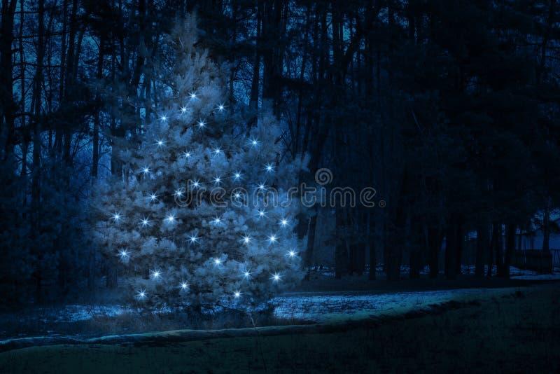 Un trea de sapin de nouvelle année décoré des lumières brillantes se tient au milieu de la forêt d'hiver de nuit photos libres de droits