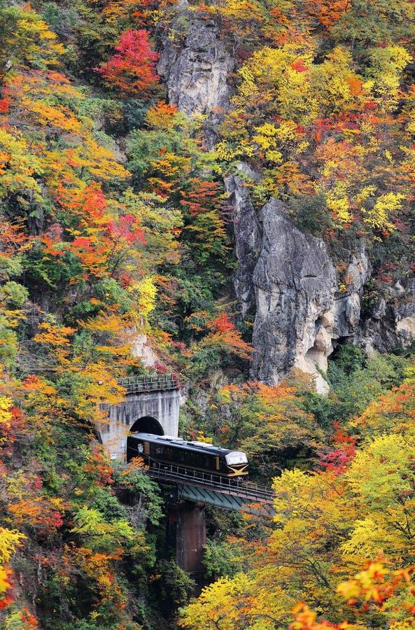 Un tren que sale de un túnel sobre un puente sobre la garganta de Naruko con follaje colorido del otoño foto de archivo