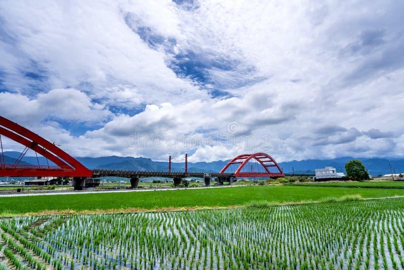 Un tren a través de la mañana - mecanografíe el puente rojo en los campos de arroz enormes, es vista de Taiwán en el este el 14 d fotografía de archivo libre de regalías