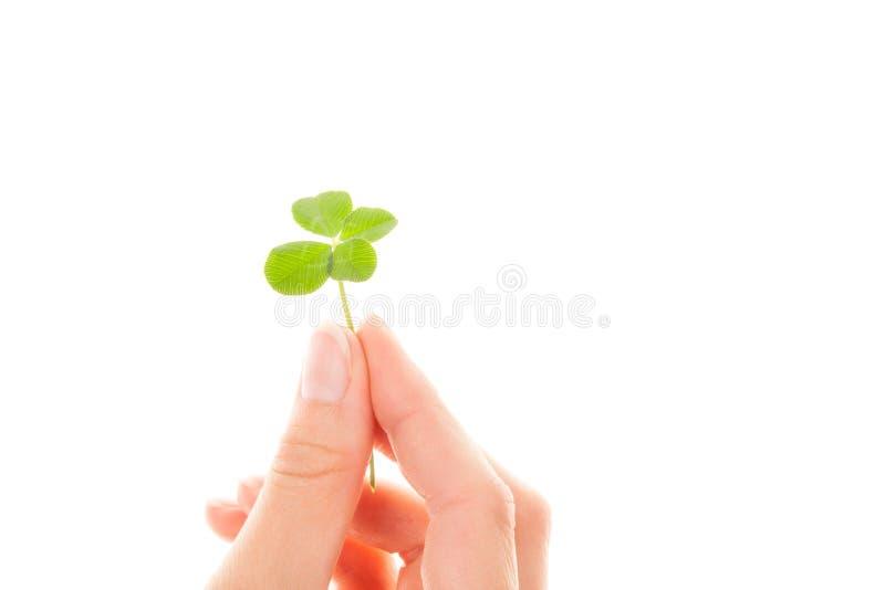 Un trifoglio dei quattro fogli Lucky Leaf fotografia stock libera da diritti