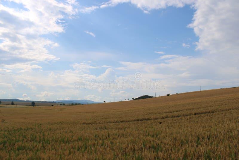 Un trigo-campo hermoso foto de archivo