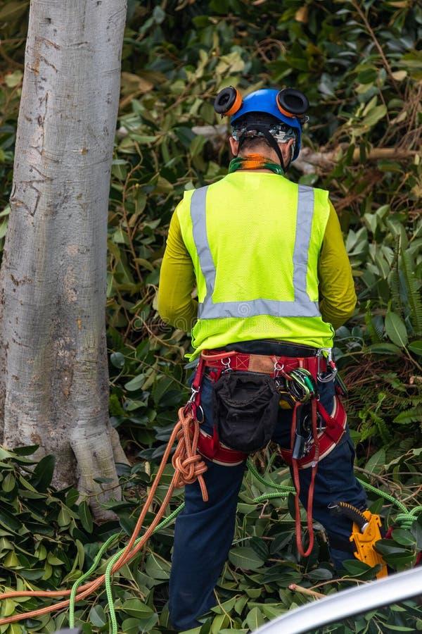 Un trimmer d'arbre avec la vitesse préparant pour s'élever photos libres de droits